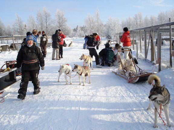 טיול ללפלנד, מזחלות כלבים לפלנד
